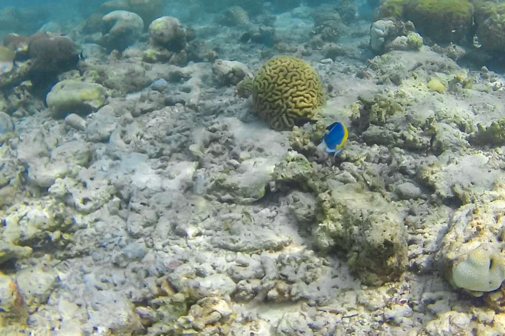 海中白化的珊瑚